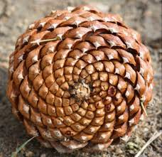 pomme-de-pin-couleuryourte-habitat-insolite-yourte-tipi-teepi-teepee-cabane-dome-zome-pomme-de-pin-roulotte